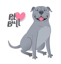 Blue gray pit bull terrier happy pitbull vector