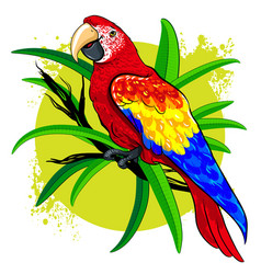 drawing a large bright colored parrot on vector image