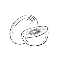 Hand drawn kiwi sketches vector image