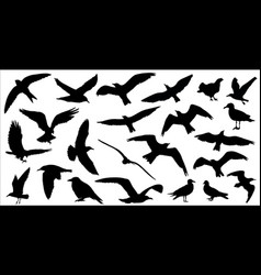 set of birds silhouettes 23 in 1 on white vector image vector image