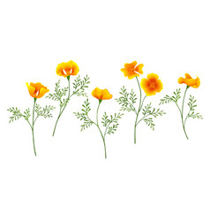 California poppy set vector