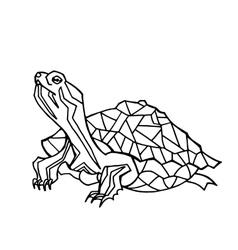Hand drawn turtle vector