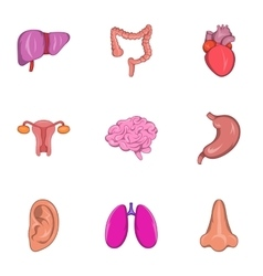 Human organs icons set cartoon style vector image