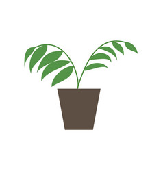 Icon in flat design ficus vector