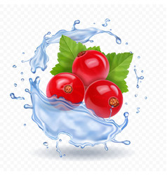 Red currant isolated in water splash berry vector