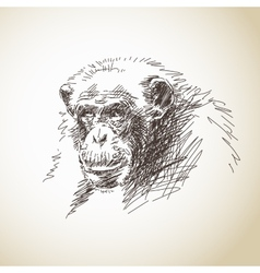 Sketch of chimpanzee head vector image