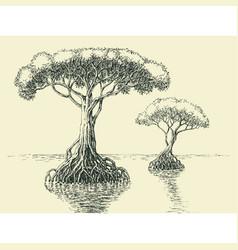 Mangrove tree hand drawing tropical trees growing vector