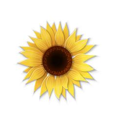 Paper art sunflower vector