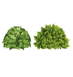garden bush with green vector image