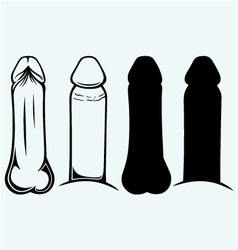 Anatomy penis vector