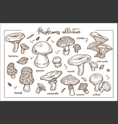 Edible and inedible ripe forest mashrooms vector