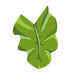 elephant ear leaf icon cartoon style vector image