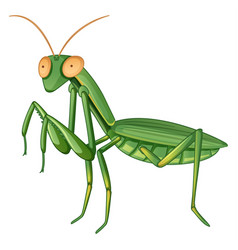 Gpraying mantis on white background vector