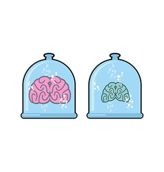 Human brain in laboratory flask for experiments vector image