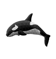Low poly with isolated beautiful orca vector