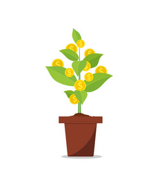 money tree in flower pot vector image