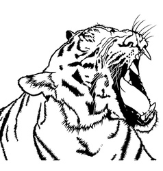 Roaring Tiger vector