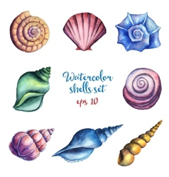 Watercolor shells set vector