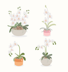 white orchid flower pot plant collection flat vector image