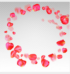 A lot of falling red rose petals on transparent vector