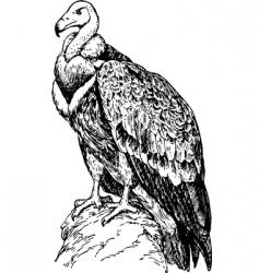 bird gyps vector image vector image