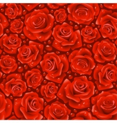 red rose background vector image