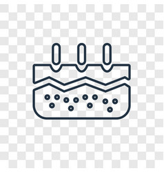 Epidermis concept linear icon isolated on vector