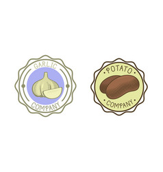 garlic and potato badge vector image
