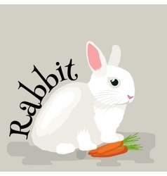 Pets Domastic animals white rabbit isolated vector image vector image