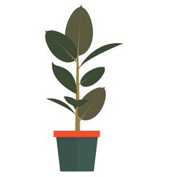 plant in pot home interior element vector image