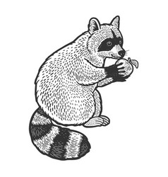 Raccoon and apple sketch vector