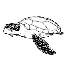 sea turtle animal cartoon on white background vector image