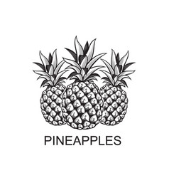 Image of pineapple fruits vector