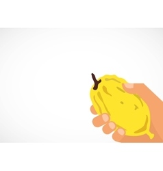 Hand holding a citron Etrog in Hebrew vector image vector image