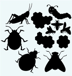 Species of insects vector image