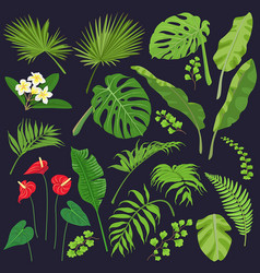 tropic leaves and flowers set vector image vector image