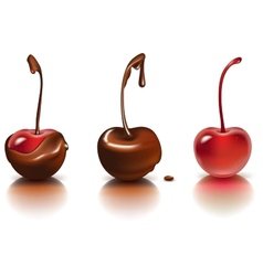 Chocolate cherries vector