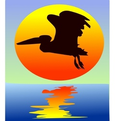pelican on sunset vector image