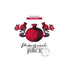 pomegranate juice logo template vector image