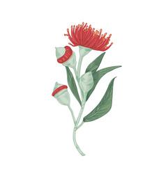 Realistic blooming red flower eucalyptus tree vector