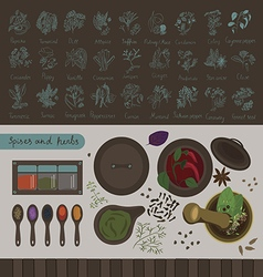 spices and herbs of the world vector image