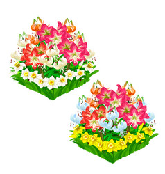 Two beautiful flower beds isolated vector
