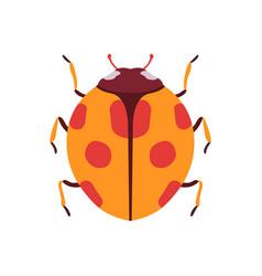 ladybug beetle insect bug top view flat vector image