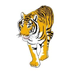 Tiger draw vector