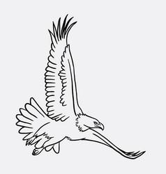 eagle bird flying sketch vector image