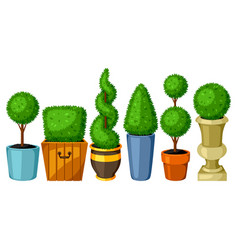 Boxwood topiary garden plants set decorative vector