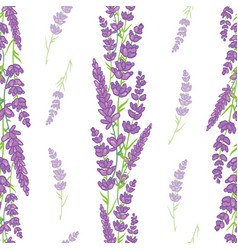 Lavender bouquets borders seamless pattern vector