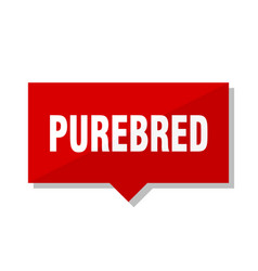 purebred red tag vector image