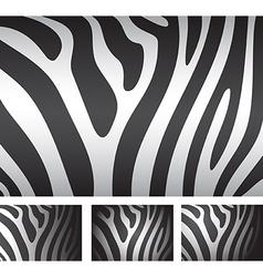 zebra skin backgrounds vector image