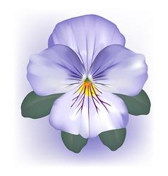 pansy viola flower bloom vector image vector image